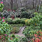 Campbell Rhododendron Gardens by Geoff Smith