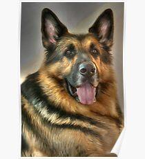 German Shepherd Poster