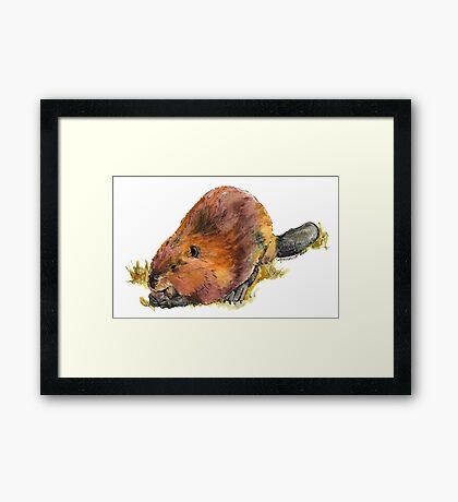 Pudge the Beaver Framed Print