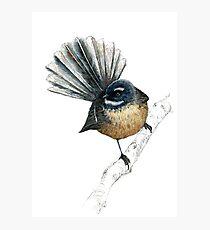 Herr Pīwakawaka -Fantail, Neuseeland einheimischer Vogel Fotodruck