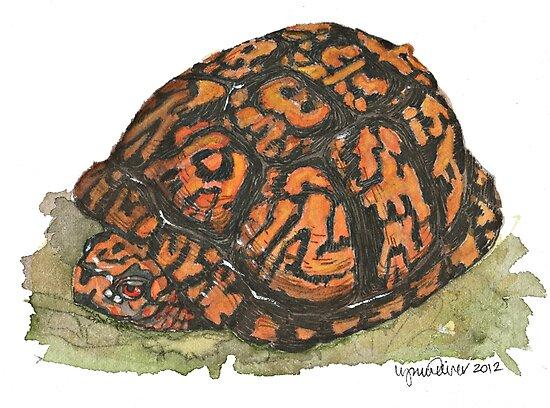 Eastern Box Turtle by Lynn Oliver