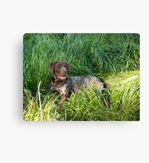 Just chilling in the green grass..... Canvas Print
