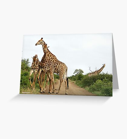 COMEPTITION - GIRAFFE – Giraffa Camelopardalis (KAMEELPERD) Greeting Card