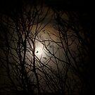 Beware The Halloween Moon by Ann  Van Breemen
