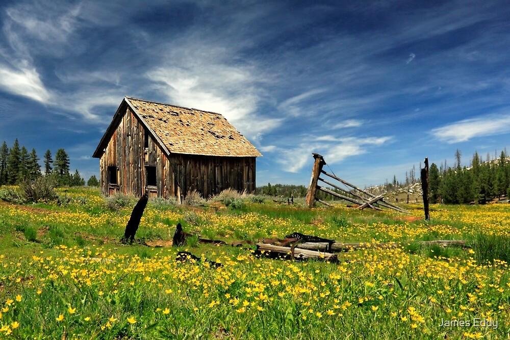 Cabin In A Field Of Flowers by James Eddy