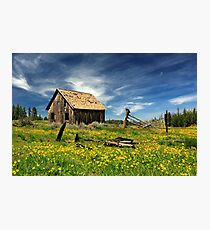 Cabin In A Field Of Flowers Photographic Print