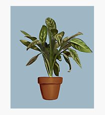 Ficus Photographic Print