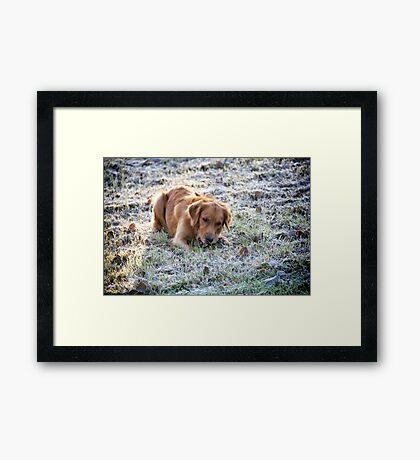 Frosted dog Framed Print