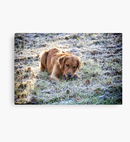 Frosted dog Canvas Print