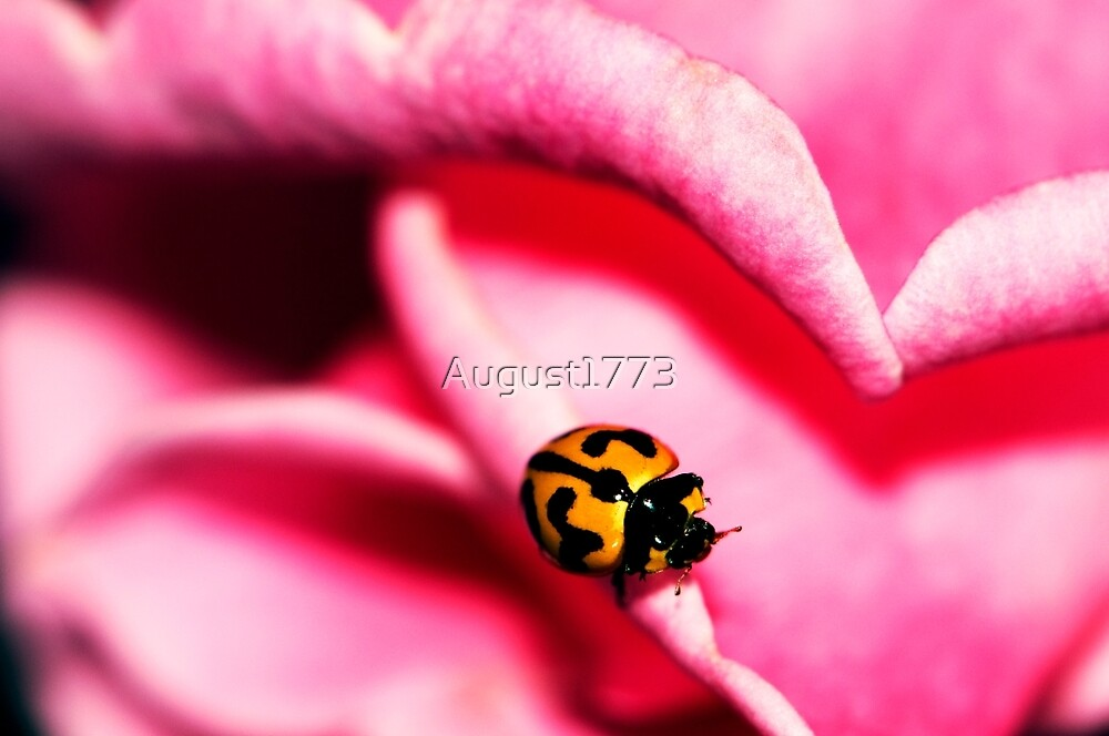 Ladybug by August1773