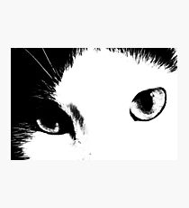 Cat Eyes (Black and White) Photographic Print