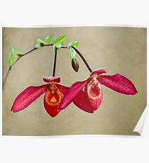 Orchid twins Poster