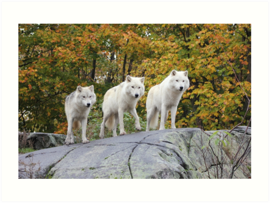 Three of a Kind by Vicki Spindler (VHS Photography)