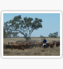 Cattle droving on the outskirts of Longreach Sticker