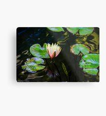 Water Lily in Japanese Gardens Metal Print