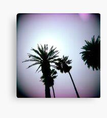 Holga Palms Canvas Print