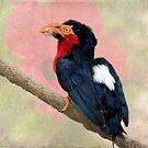 Colorful Bird on a Rope by Rosalie Scanlon
