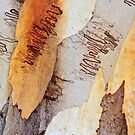 Colours of the Scribbly Gum by Dilshara Hill