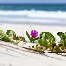 Wild flower by Melissa Dickson
