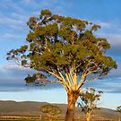 The East Coast of Tasmania by Leeo