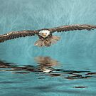 Bald Eagle on Misty Lake by Brian Tarr