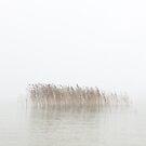 Fullness by Christophe Besson