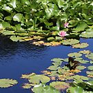 Lilies and Lily Pads by FishAndFridays