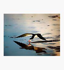 Skimmer Photographic Print
