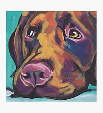 Chocolate Labrador Retriever Dog Bright colorful pop dog art Photographic Print