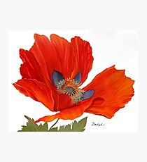 Orange Poppy By Dianna Derhak Photographic Print