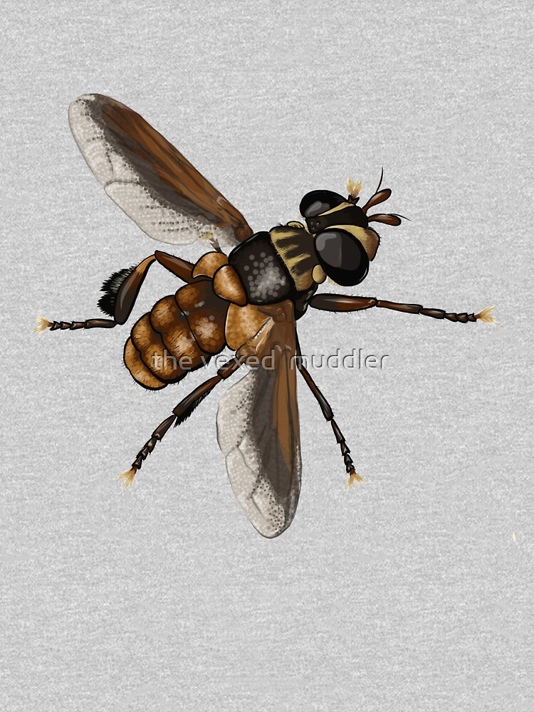 Feather-legged fly - Trichopoda subdivisa by thevexedmuddler