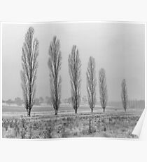 Winter Trees - Uralla NSW Australia Poster