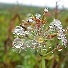 An Explosion of Dew by Eileen McVey