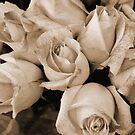 Sepia Roses by WildestArt