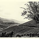 Vineyards #1 by Ronny Falkenstein