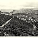 Vineyards #2 by Ronny Falkenstein