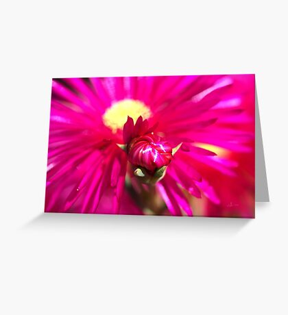 Hot Pink Ice Plant/Pigface Flower Greeting Card