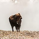 Bison Sticking His Tongue Out by Sue Smith