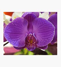 Orchid, Changi Airport, Singapore Photographic Print