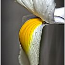 Flower (macro) by Wolf Sverak