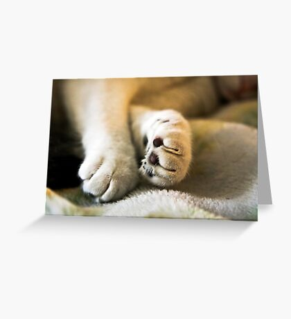 Sophia's Peaceful Paws Greeting Card
