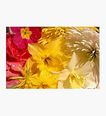 Pink and Yellow Dew Drops Photographic Print