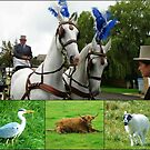 Alle Kreaturen-Collage von BlueMoonRose