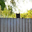 The Rare stray cat by Jemma Richards