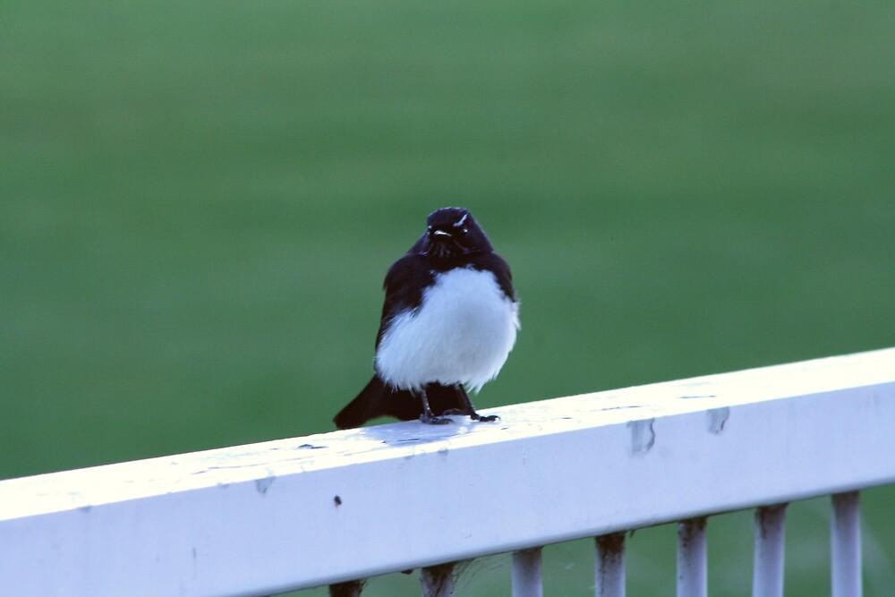 Bird on a rail by Jaime Cifuentes