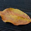 Autumn Leaf on Dark Wet Wood by KimSha