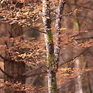 Branches by Svetlana Sewell