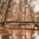 Forest River by Svetlana Sewell