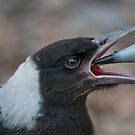 Baby Magpie 2 by Werner Padarin