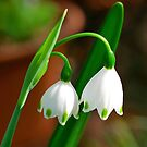 Spring Snowdrops by Penny Smith
